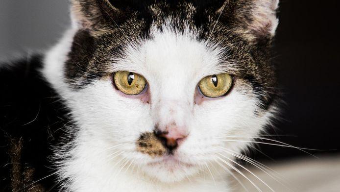Karel, de kat van Harry van Doorn, moest aan de insuline.