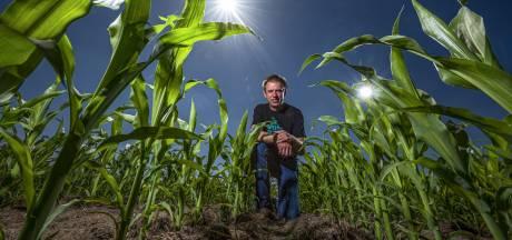 Minder gele velden in Lochem: giftige onkruidbestrijder blijft vaker in  de kast