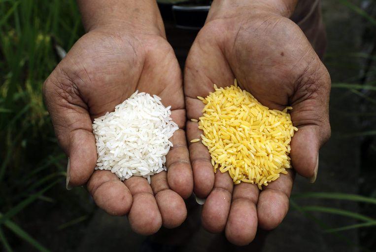 Golden rice zou een oplossing kunnen zijn voor het vitamine A tekort. Beeld reuters