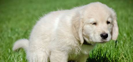 Kleuter treft gedumpte dode hondjes aan in bos bij Diessen: 'Absurd en asociaal'
