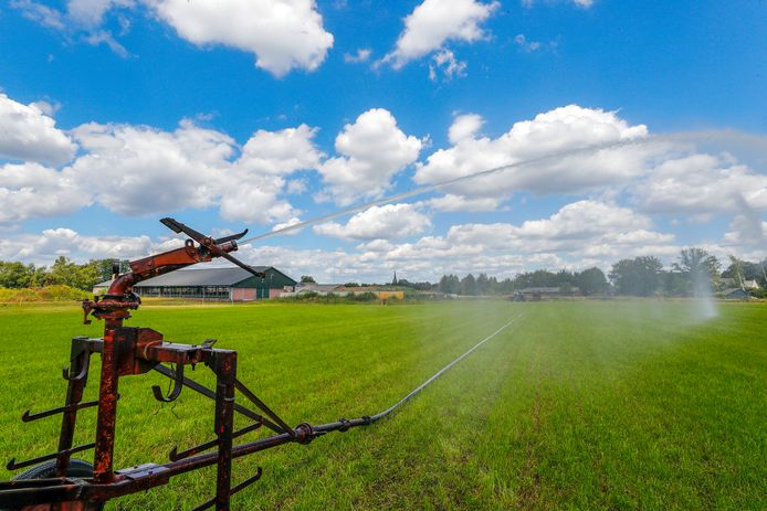 De afgelopen zomers werd 100 miljard liter grondwater per jaar gebruikt voor beregening van akkers en weilanden. Archieffoto