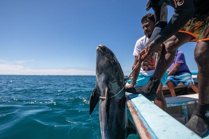 Vissers trekken een dode dolfijn uit de zee na de scheepsramp.
