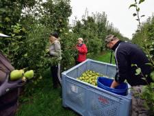 Huisvesters van arbeidsmigranten in Maasdriel negeren nachtregister om onder verblijfsbelasting uit te komen; 'te veel rompslomp'