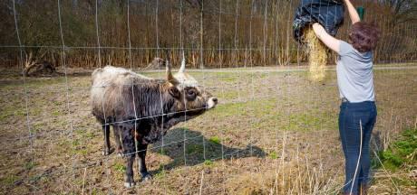 Actie bij Oostvaardersplassen is reactie op 'onwilligheid' provincie, zegt organisator