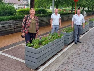"""Leopoldstraat krijgt er 75 nieuwe bloembakken bij: """"Wandel- en terraszone is zo beter afgebakend"""""""