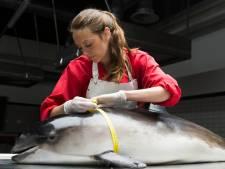 Dode bruinvissen die massaal aanspoelen 'lijken op hetzelfde moment gestorven'