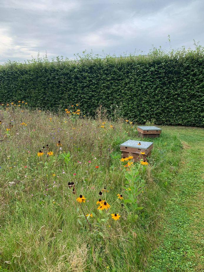 De bijtjes kunnen hun voedsel op het terrein zelf halen, want er werden bloemenmengsels gezaaid.