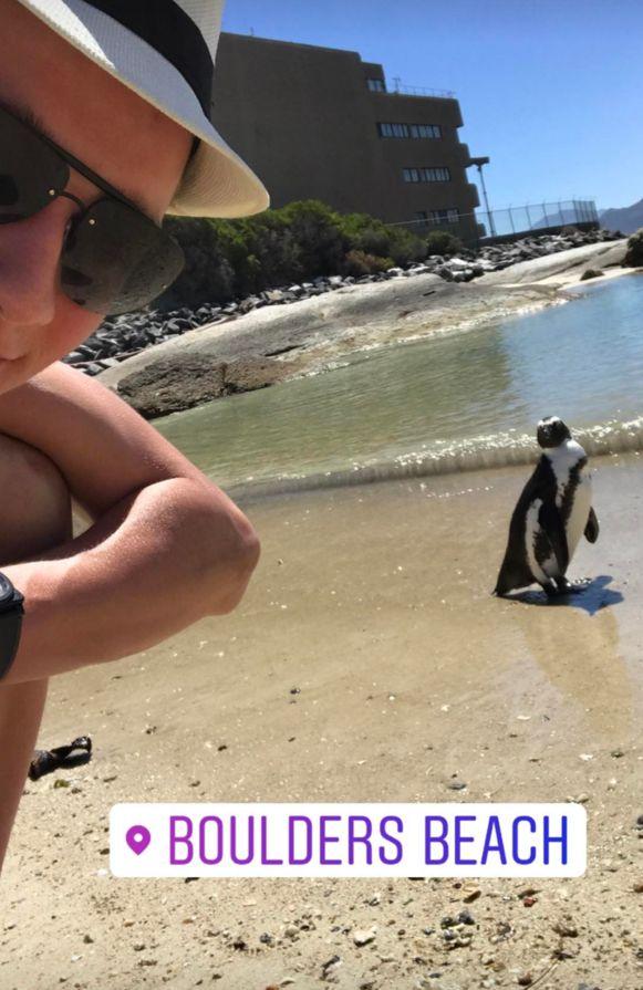 En de Nederlander liep er zelfs een pinguïn tegen het lijf.