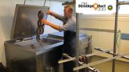 """West-Hagelandse zwarte pensen van Beenhouwerij Vangramberen: """"Toprestaurants lanceren pensen tegenwoordig als 'de nieuwe kaviaar'"""""""