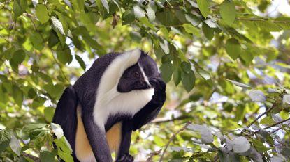Nieuwe Rode Lijst IUCN: meer dan 28.000 soorten met uitsterven bedreigd