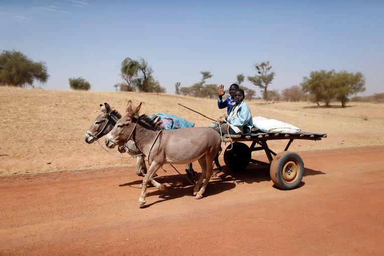 De Chinese vraag naar ezels is zo groot dat Afrikaanse landen de export aan banden hebben gelegd om te voorkomen dat er geen dier meer overblijft.