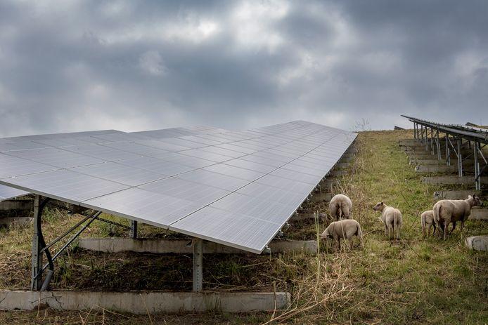 Natuurlijke grasmaaiers schapen grazen tussen de zonnepanelen op het zonnepark AVRI