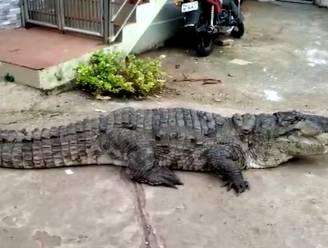 Dorp op stelten door uit de kluiten gewassen krokodil