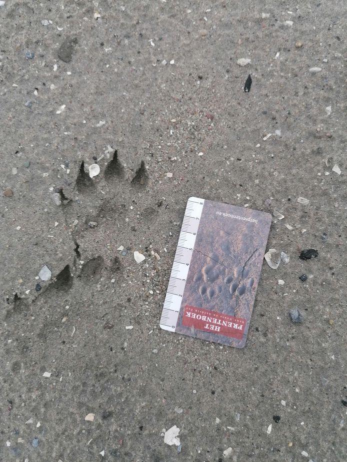Op IJburg zijn sporen gevonden van een otter.