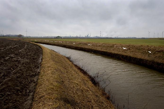 De Kabeljauwbeek in de polders bij Ossendrecht is de locatie waar Eneco al jaren vijf windturbines neer wil zetten. Woensdag vernietigde de Raad van State echter de vergunning.