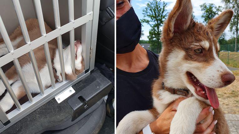 Links: zo vond de politie de opgesloten husky terug. Rechts: nadat hij bevrijd was.