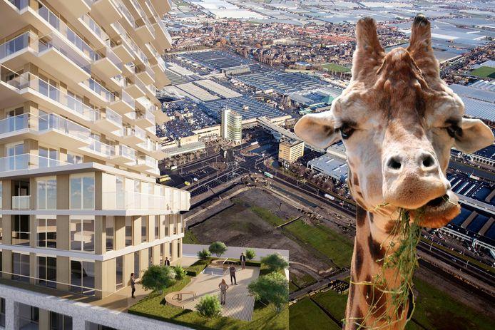 Fotomontage AD. Wat moet er met het terrein van Royal Floraholland in Naaldwijk gebeuren? Woningen of misschien een dierentuin?