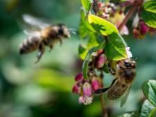 Insectencamera's moeten uitwijzen of ecologisch beleid werkt