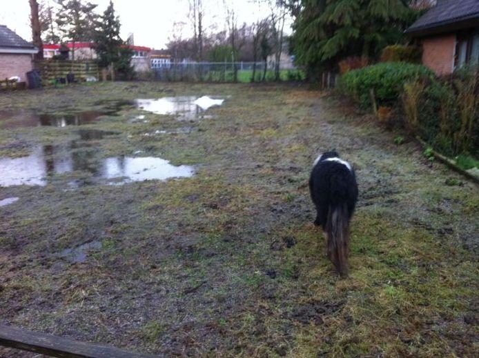 De nog levende pony in het drassige en volgepoepte weilandje tussen twee woningen in Winterswijk. Foto De Gelderlander