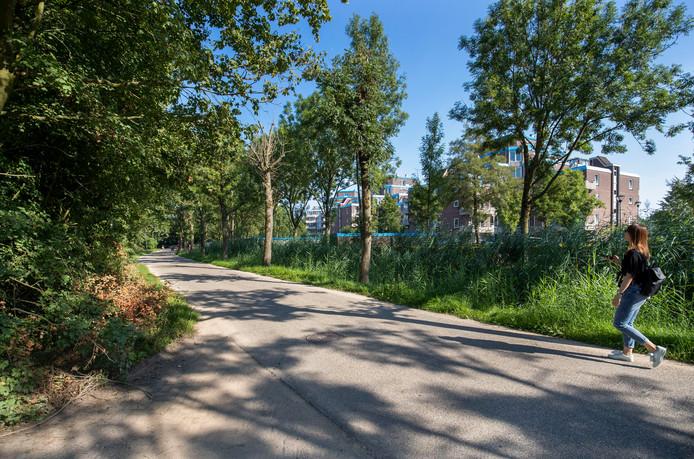 De Haarweg in Wageningen.