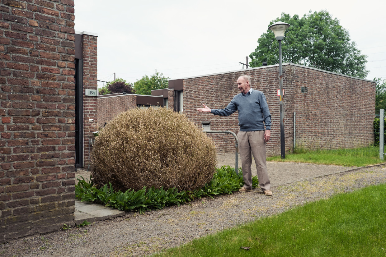 Een man zag zijn buxusplant teloorgaan. De oorzaak is de buxusmot, waarvan de rups wel een groen blaadje lust. Beeld Damon De Backer
