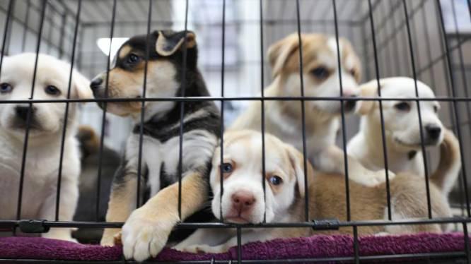 """Dierenmishandeling in China: huisdieren verkocht in """"verrassingsdoos"""""""