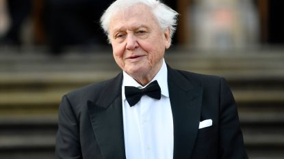 Carrièrewending voor David Attenborough: 93-jarige documentairemaker wil dancehit uitbrengen