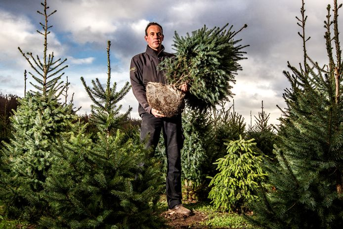 Teler Gerben Gooiker waarschuwt: het succesvol terugplaatsen van kerstbomen is erg lastig.