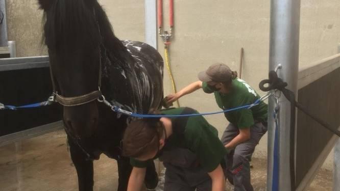 """PITO start volgend schooljaar met opleiding Paardenhouderij: """"Beantwoordt aan opkomende sector"""""""