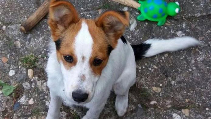 Hondje Kees wordt erg gemist door zijn baasje en diens familie.