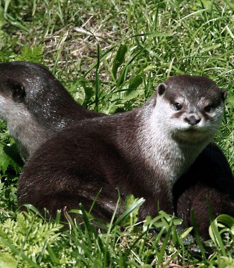 Otters spotten in de herfstvakantie