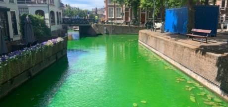 Dit is waarom de Haagse grachten felgroen kleuren
