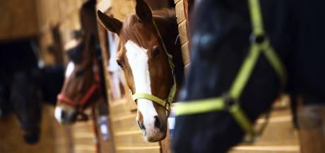 Fiscus haalt miljoenen terug bij paardenhandelaars