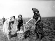 Hoe werkten Zoetermeerders vroeger? Bijzondere tentoonstelling bij Historisch Festival