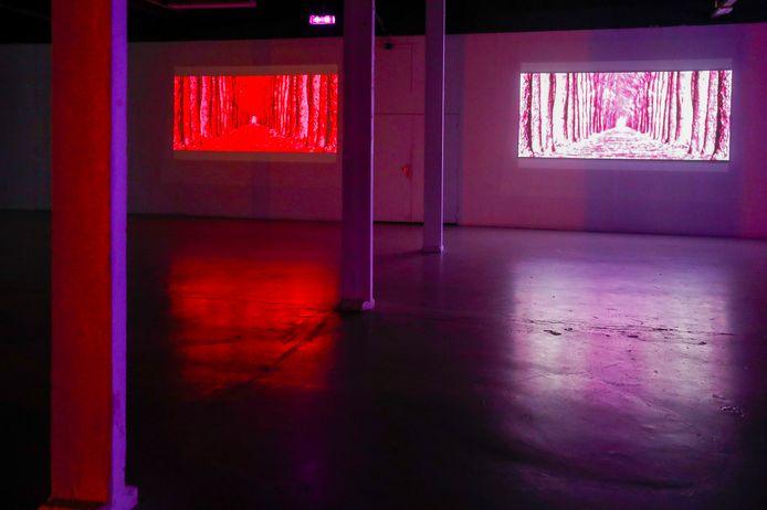Een onderdeel van de tentoonstelling van Richard Bolhuis in het TAC.