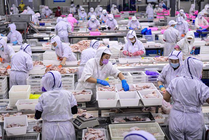 Beeld uit een kippenfabriek in China.