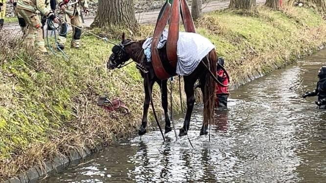 Tochtje met koets loopt fout af: paard moet gered worden uit water, twee mensen naar ziekenhuis