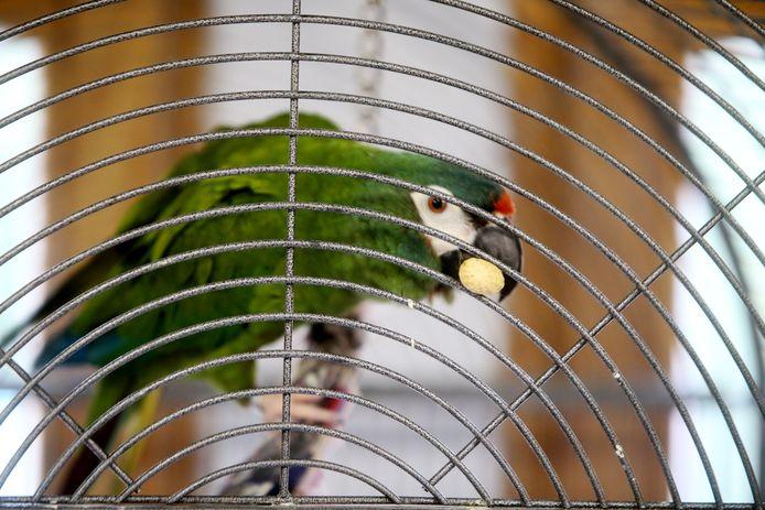 Het Vogelopvangcentrum en de Papegaaienopvang krijgen geld van Vlaanderen.
