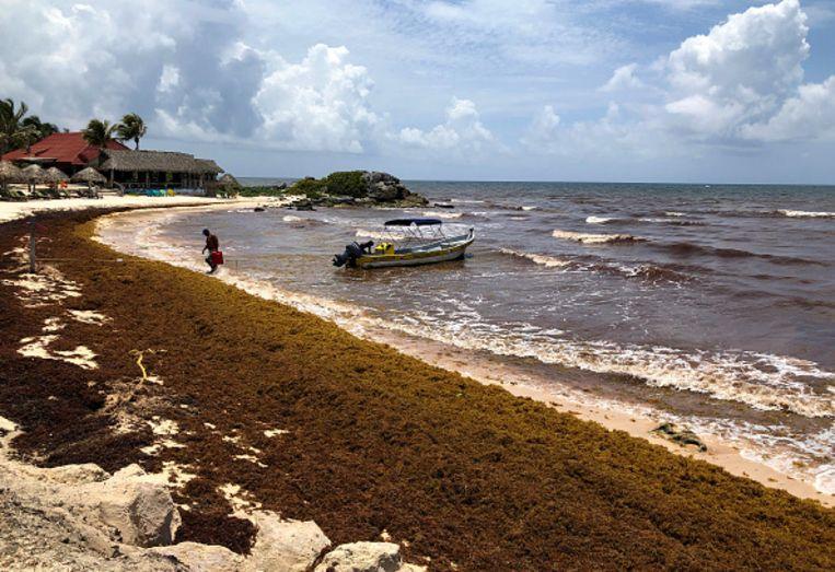 Het strand van de Mexicaanse badplaats Tulum is bezaaid met sargassum.  Beeld Justin Sullivan / Getty