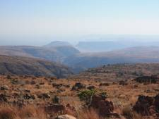 Leeuwen verorberen veelbelovende sporenzoeker (27) in wildpark Zuid-Afrika