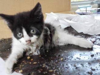 Elke dag tien meldingen van dierenmishandeling