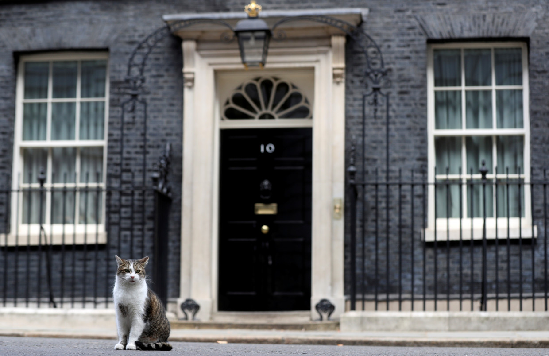 Larry, de kat van 10 Downing Street, de ambtswoning van de Britse premier. Beeld Reuters