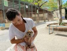Rossana Kluivert: Geen fraude of oplichting bij hondenopvang op Curaçao