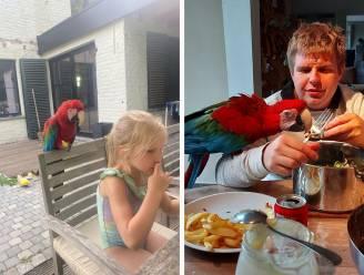 """1.000 euro voor tip naar vermiste papegaai Rio: """"Wij en de buren zijn er het hart van in"""""""