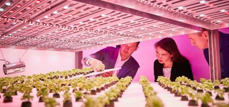 Brabantse pluim voor Bossche en Eindhovense onderzoekers naar duurzame groenten- en fruitproductie