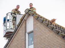 Rode kater klem achter zonnepanelen in Woerden