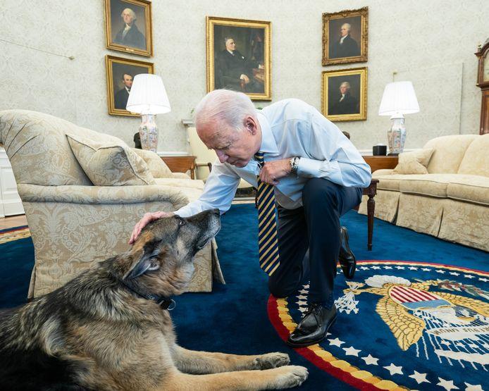 De Amerikaanse president Joe Biden aait herdershond Champ in het Oval Office van het Witte Huis.
