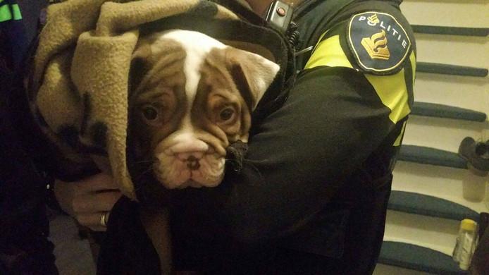 Een van de pups is teruggevonden in Breda