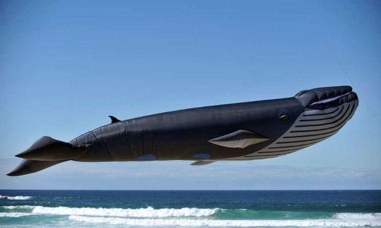 Een gigantische vlieger in de vorm van een walvis hangt boven het strand bij Sydney. Beeld EPA