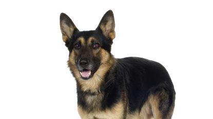 Dogsitter die zich aan hond vergreep terwijl baasjes op vakantie waren mag drie jaar geen dieren houden